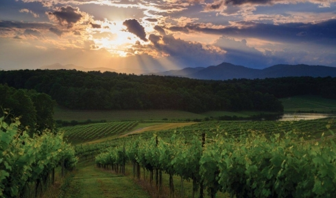 North Carolina's Hidden Wine Country