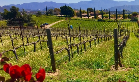 Exploring SoCal's Fallbrook Winery