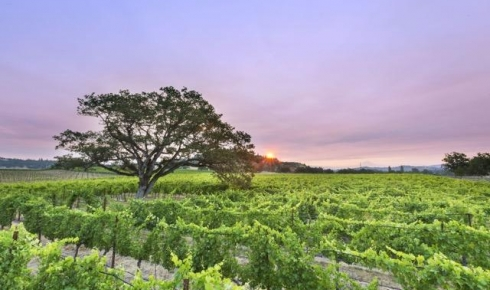 Escape to the Rogue Valley Wine Country